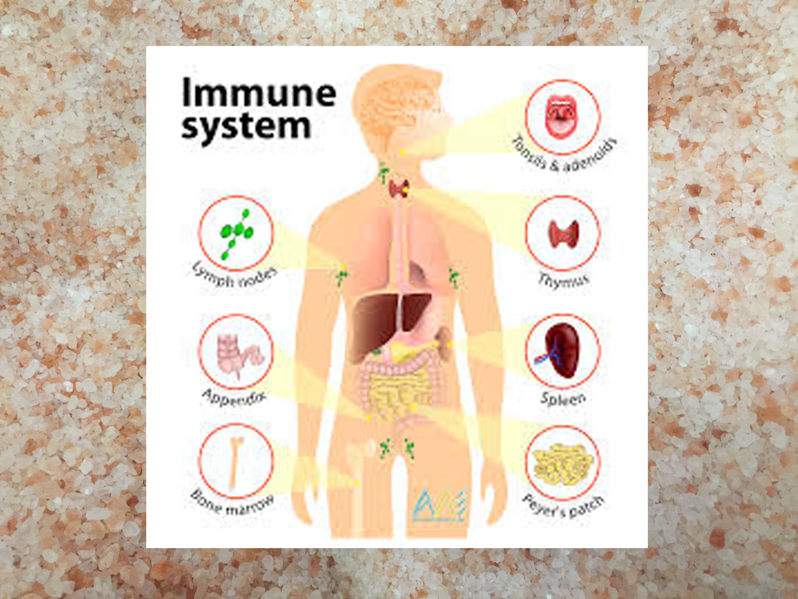 Health benefits of Negative Ions for Healing and The Immune system
